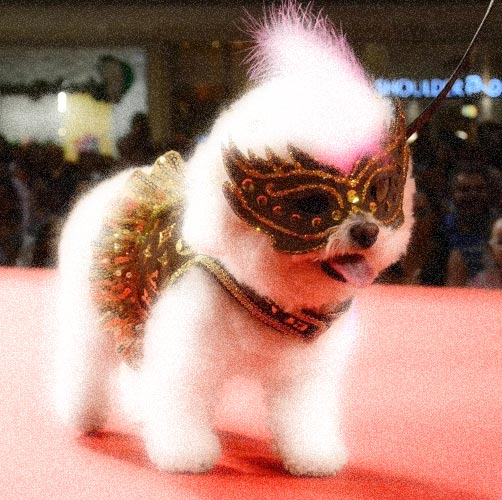 foto_cachorro