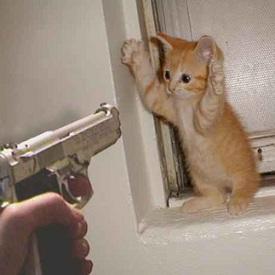 Fobias-Odeio gatos