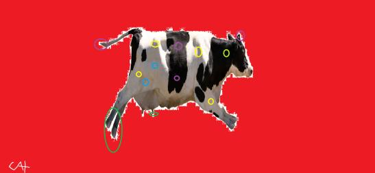 Vaca da fé