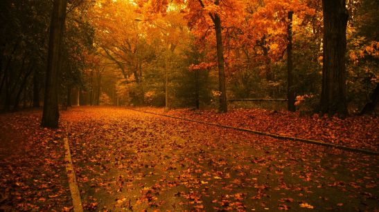 Autumn-Road-Pictures-HD