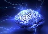 gen-evolucion-cerebro