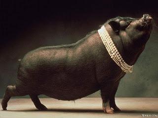 porco-1
