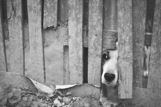 dog-1210565_960_720